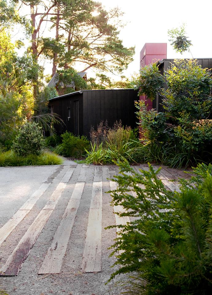Recycled sleepers in granite gravel define the parking area. Specimens of showy honey myrtle (Melaleuca nesophila), ribbons of bottlebrush and groupings of she-oaks create a screen from the driveway. The dark cladding of the house shows off the greenery.