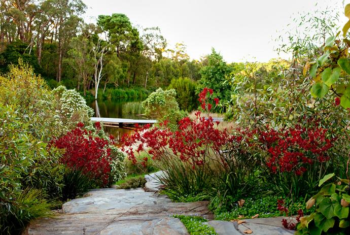 In summer the lake views are framed by fiery red seas of kangaroo paw (Anigozanthos 'Big Red') and long-flowered marlock (Eucalyptus macrandra). Native violets grow between the slate steps leading to the sunken sitting area.