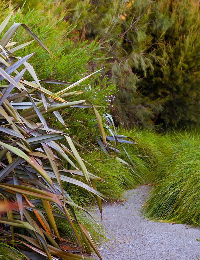 Flax (Phormium 'Anna Red') and Lomandra longifolia 'Tanika' spill onto the rear granite gravel path, softening its edges. Showy honey myrtle and she-oaks form a soft textured backdrop.