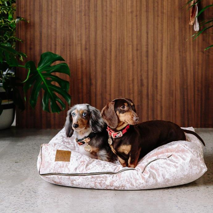 "Made of super-soft velvet scuba, this glamorous dog bed is surprisingly hard wearing and durable. Available in a range of colours to suit your interior, you wont want to hide this one away. Velvet Slouch Dog Bed in Peach, $189, from [Nice Digs](https://www.nicedigs.com.au/collections/dog-beds/products/velvet-slouch-dog-bed-peach|target=""_blank""