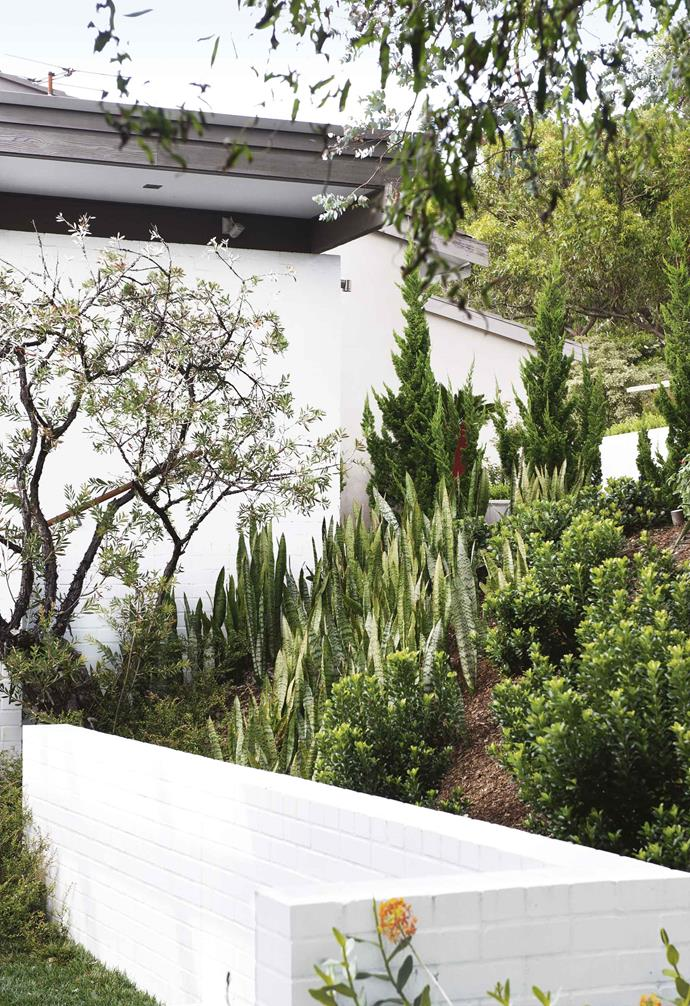 """""""The house has an element of Japanese design with all the glass and timber, which we wanted to incorporate into the coastal look,"""" says Alison. """"Landscape designers have an ability to 'see' their designs, we trusted Michael and now that we can see it too, we love it.""""<br><br>**Front garden** Spreading plants, interlaced root systems and a heavy mulch keep moisture in the soil on the slope, despite its exposure to drying winds."""
