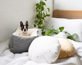 best-cat-dog-beds-hero