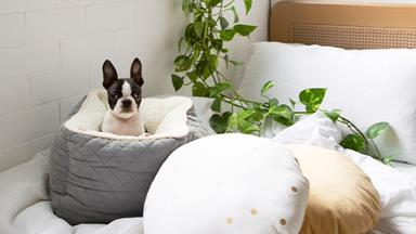 10 of the best pet beds & homes