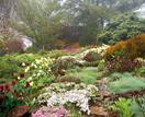 Tour an expansive Mount Tomah garden filled with rare plants