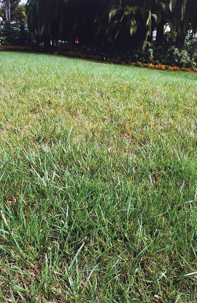 Newer varities of fescue grass are most suited to cold climate gardens.