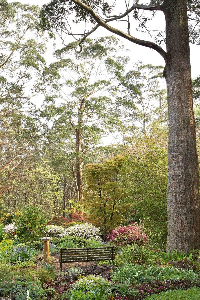 A yellow robin tinkles unseen above and a little scrubwren skips across the leaf-strewn lawn path. It's quiet and cool and peaceful. I wonder if Don finds a pleasant corner in which to meditate here occasionally, though opportunities might be limited. This property alone could keep anyone fully occupied but Don also does gardening work for clients in the Blue Mountains and sells bulbs and cut flowers such as peonies. A bench invites contemplation of the azaleas.