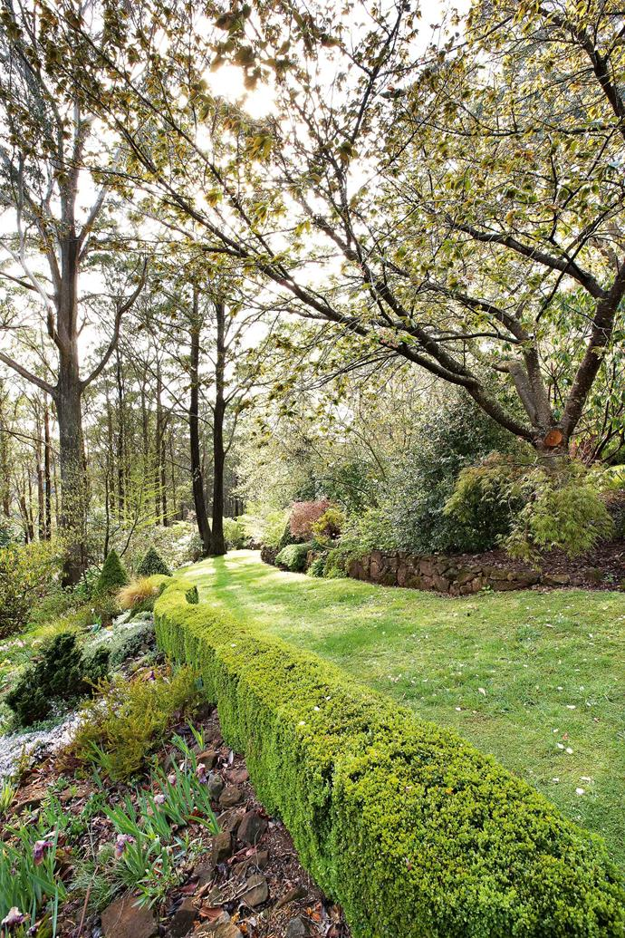 "Hedging leads down to the [woodland plantings](https://www.homestolove.com.au/garden-design-styles-19942|target=""_blank""). Don has extended the garden twice as far as he originally intended. He says there's a degree of madness behind this inability to stop — he thinks it comes with the elevation. ""Well... I got to the bottom and it was too good not to use because it was level — it had been ploughed for potatoes in the '60s. And the bit in the middle just looked silly if I didn't neaten it up."""