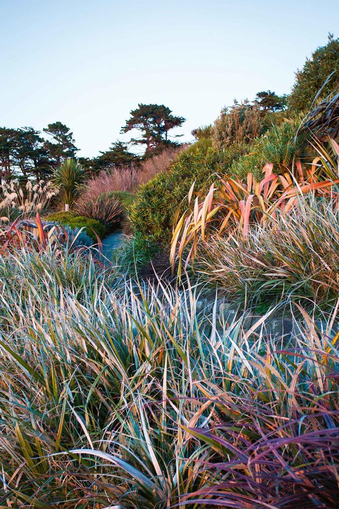 "Colourful phormiums are a highlight among the grasses. With admirable clarity, Jill articulates her understanding of the landscape she lives in. ""The interplay of huge skies, rugged wild coast and ever-present views of sea, sky and cliffs have the strongest influence,"" she explains."