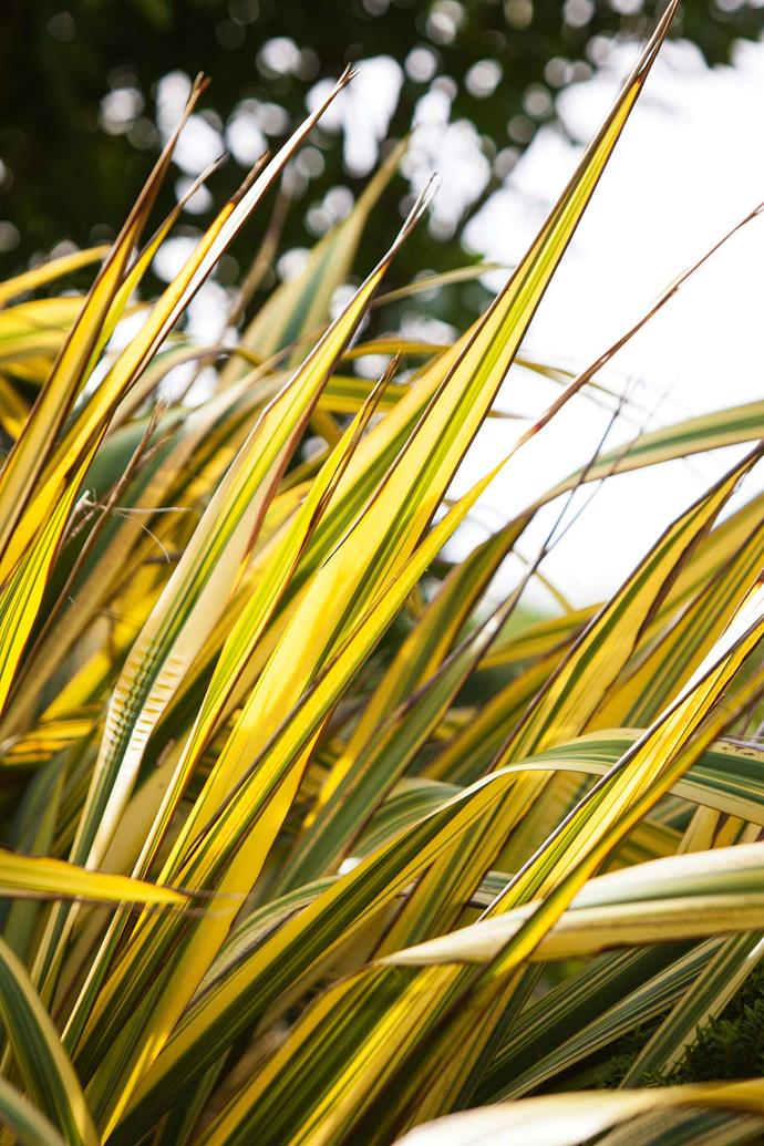 "Phormium leaves. ""I keep trying to capture the essence of place in a truly New Zealand way with low-growing shrubs and tall, grass-like plants,"" says Jill. ""But, then, I'm a gardener, so I can't resist colour and foliage contrast experiments as well."""