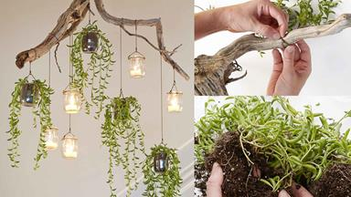 How to make a cascading indoor plant chandelier
