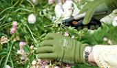 How to prune anything from roses to climbing plants