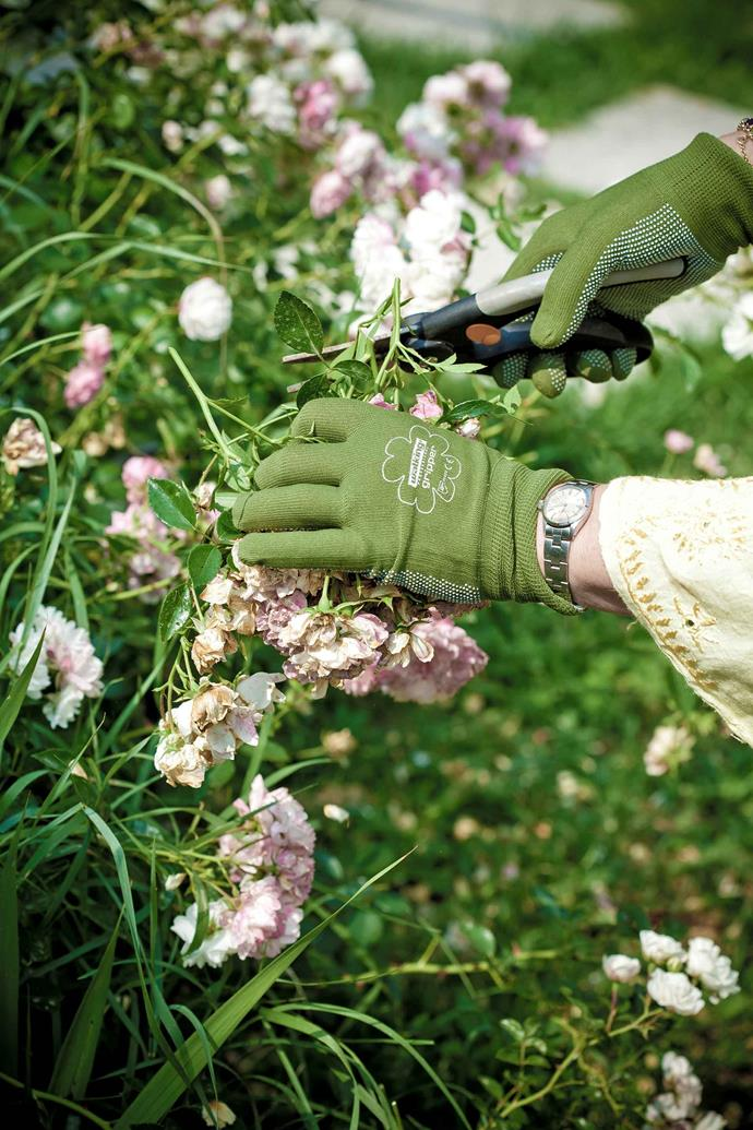 Pruning will help keep your garden tidy while promoting healthy plant growth.