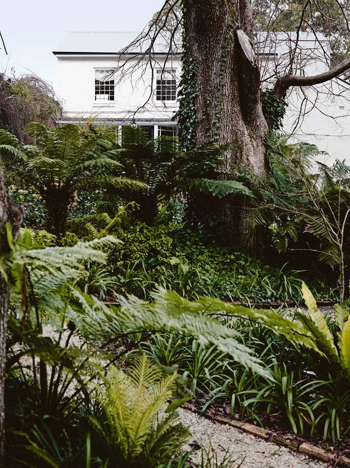 """A century-old Dutch elm surrounded by lush under-planting in the big garden. The large garden was the first thing that captured the the Kays' imagination. And the house was just what they were looking for. """"It had the charm of the cottage at the front, which took us back to living in the UK, yet it had all this extra living space,"""" says Andrew. """"It's a quirky combination but incredibly liveable."""""""