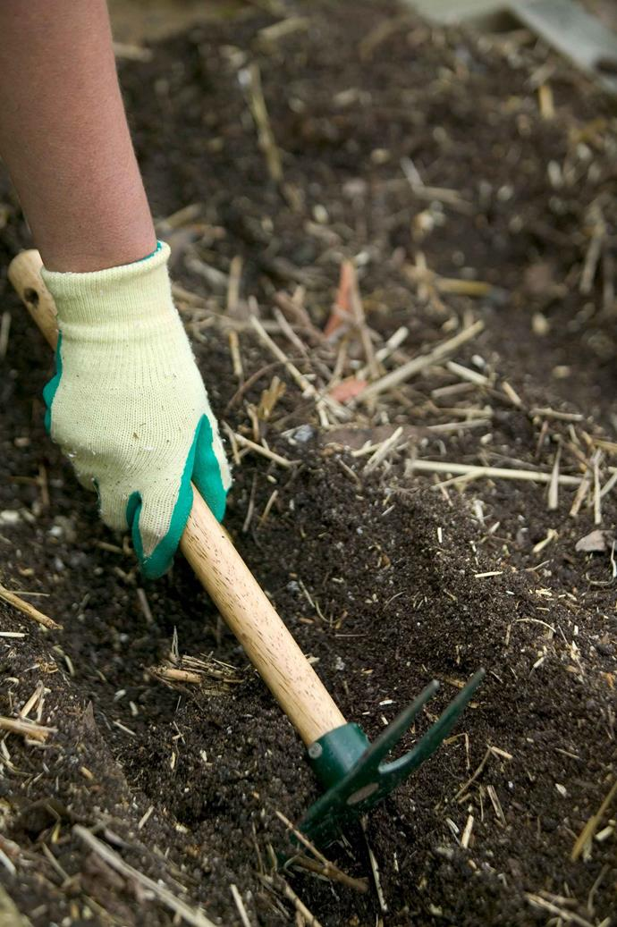 The benefits of manure and how to choose the right type for your garden