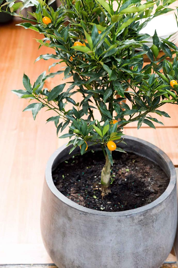 Citrus trees are one of many plants that love alkaline soil.