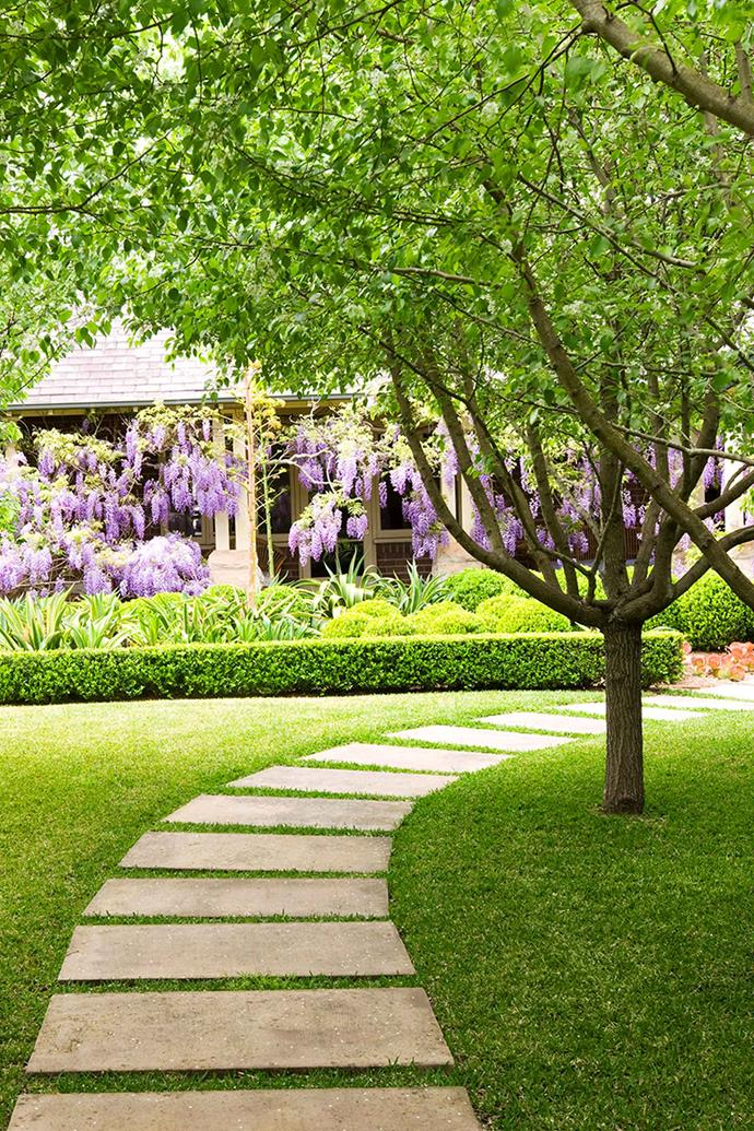 A pergola in Margaret River covered in the flowers and foliage of Chinese wisteria.