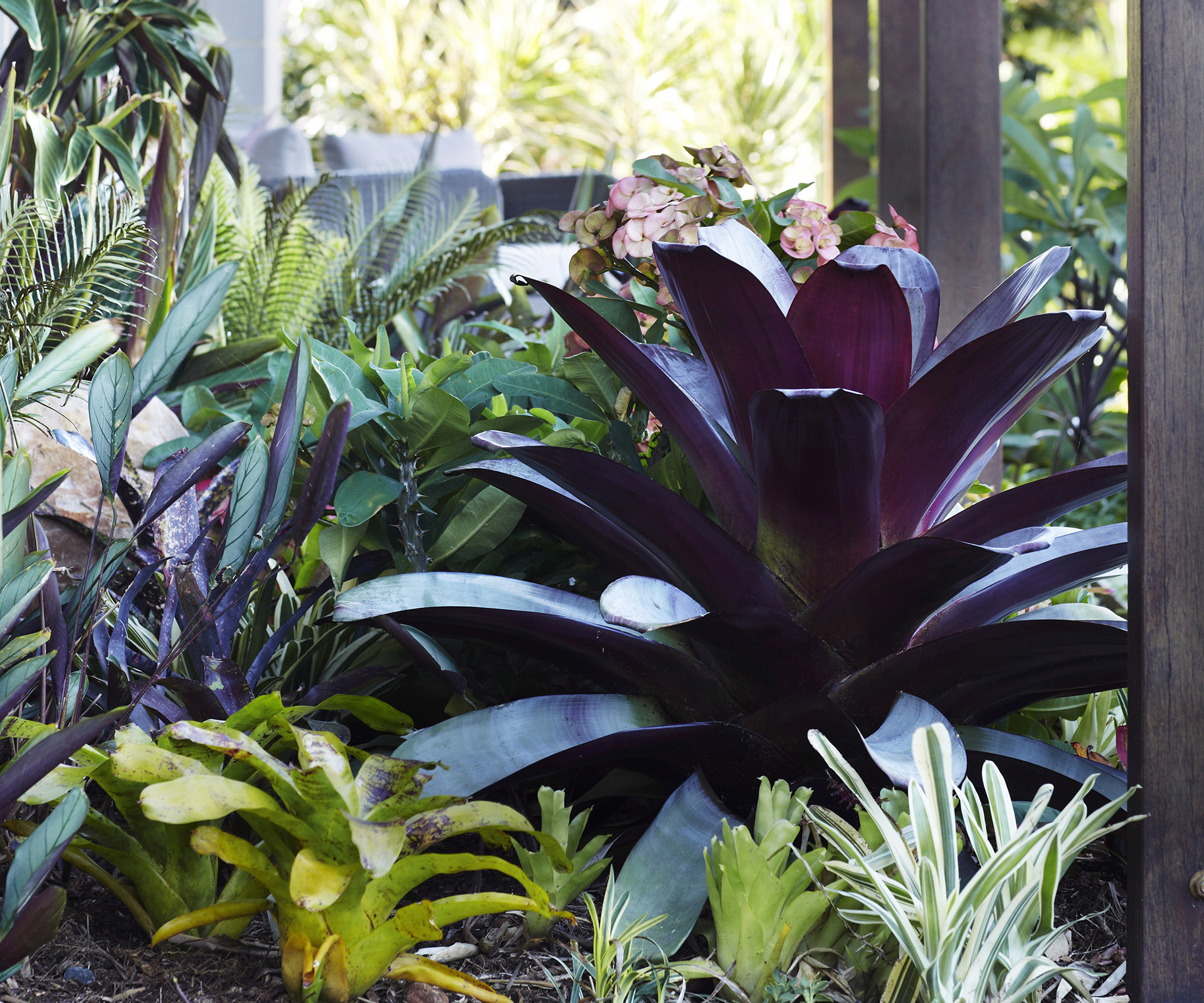 Bromeliads: tips for growing indoors, outdoors and in pots