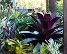 Plant guide: Bromeliad