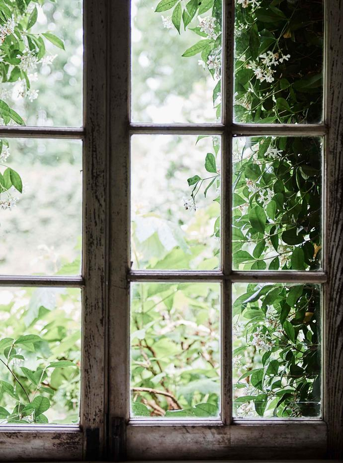 Tangles of star jasmine are visible through the window. On breezy days, their strong fragrance travels through the cottage.