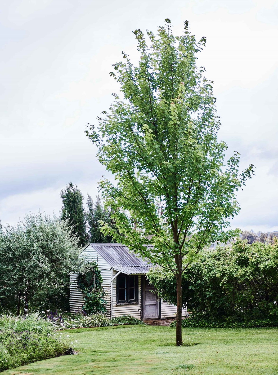 "An old cubby house, constructed from corrugated iron back when the kids were little, remains a feature in the garden of this [farmhouse cottage on a rose farm](https://www.homestolove.com.au/rose-farm-cottage-20409|target=""_blank"") near Yass, NSW."