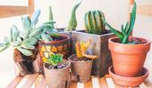 Biodegradable plant pots: everything you need to know