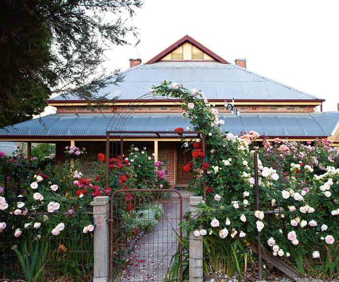 Australian rose garden Adelaide Hills cottage