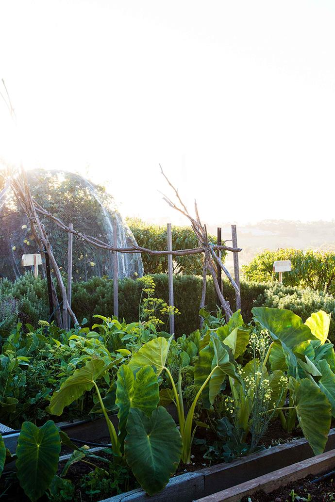 Garden netting isn't just for protecting fruit trees from birds! Netting can be placed over the top of vegetables to prevent butterflies and moths from laying their eggs.