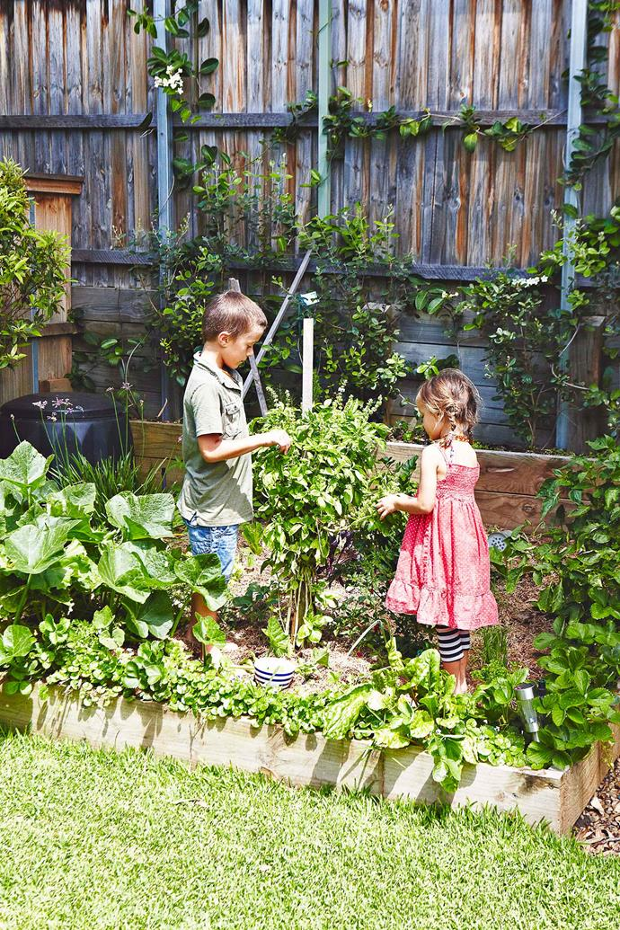 Even kids can help search for caterpillars in the vegie patch.