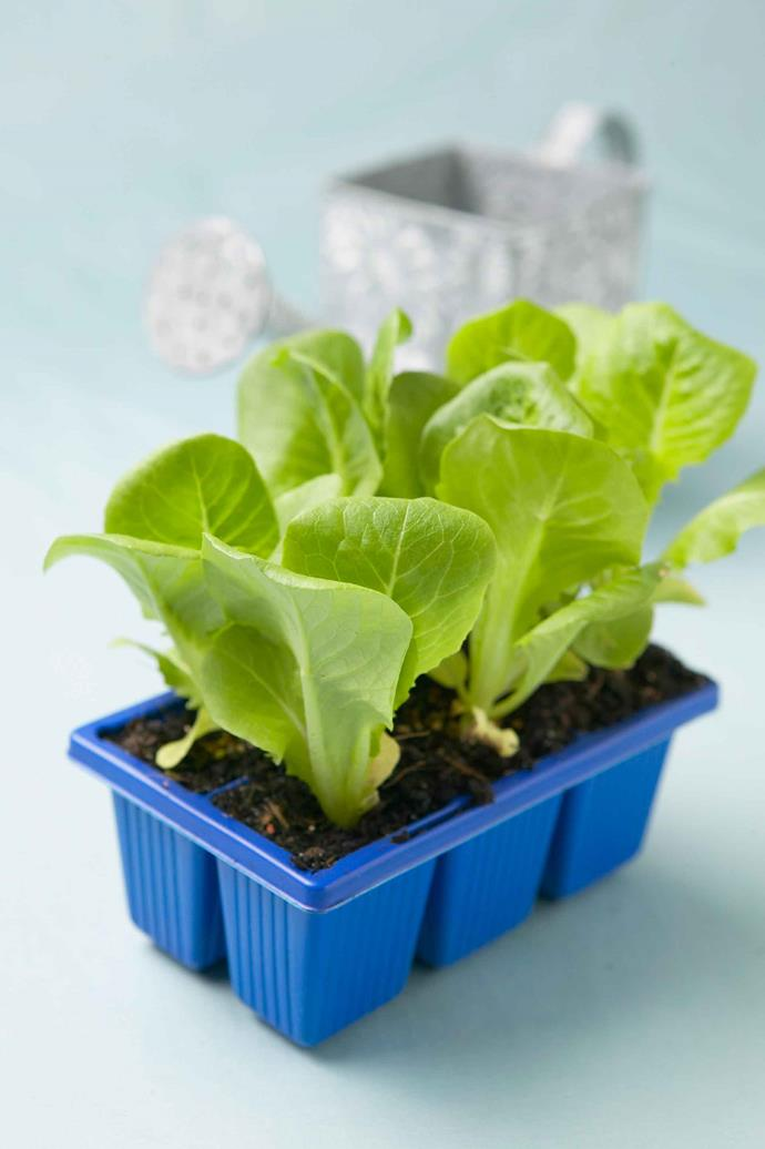 Seedling trays are a must-have when growing plants from seed. There are many plastic options available, but opt for biodegradable pots where possible.