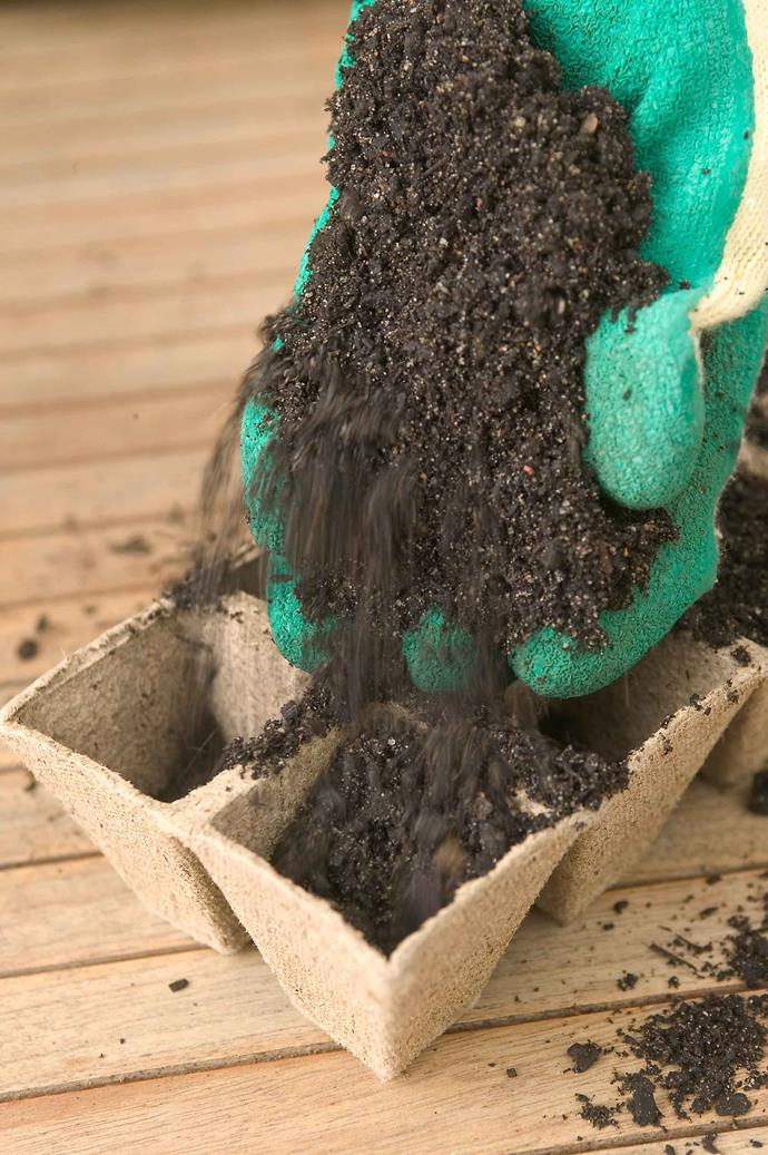 It's important to use specially formulated potting mix when planting seeds. This will prevent the seeds from disease, rot and fungal problems.