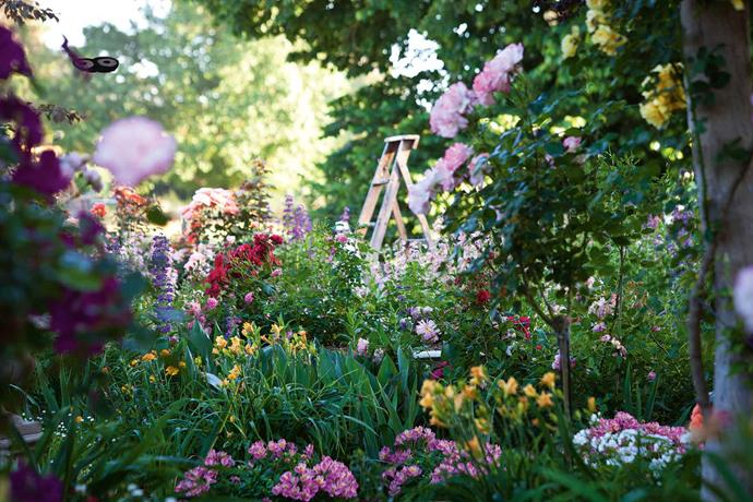 A ladder stands behind a bed of pink and yellow alstroemeria, penstemons, daylilies and 'Bold Seduction' (pink) roses. It's not just flowers at Frosty Flats. Alex and Neil's daughter Christine takes care of the family vegetable garden and runs a part-time gardening maintenance business.
