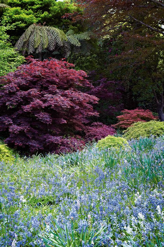 "The trees include oaks, golden ashes, chestnuts, maples, copper beeches, weeping elms, crab-apples, lilacs, enkianthus, dogwoods and magnolias. Banks of azalea 'Mollis', beds of peonies, and 'Gertrude Jekyll' and 'Queen Elizabeth' roses form vibrant borders to wild woodland that stretches beyond the formal areas. ""Some people come here and they're almost running in circles because they're so excited,"" Tony says."