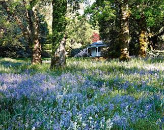 Nooroo gardens house flowers