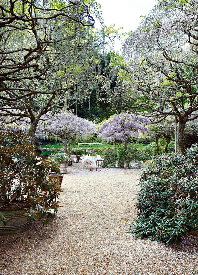 Nooroo is most famed for its spectacular displays of wisteria. Peter Valder collected many varieties over the years, locally and from Asia, Europe and North America. Visitors from around the world are drawn to Nooroo as the wisteria comes into full bloom in late October.
