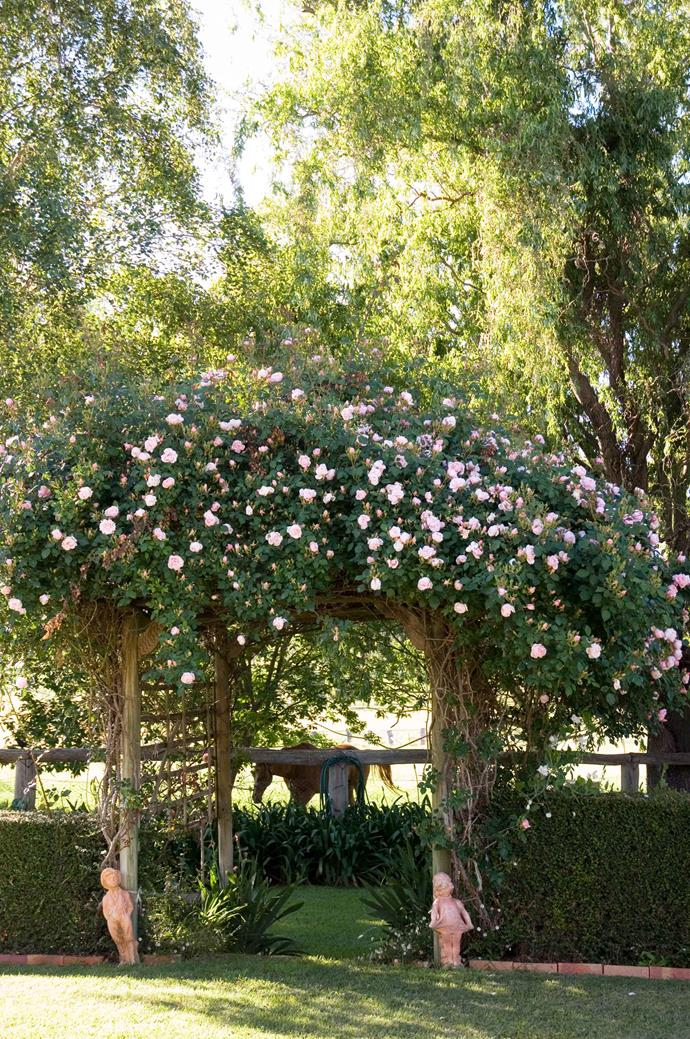 While most people automatically think of shrub roses, there are a number of gorgeous climbing rose varieties available.