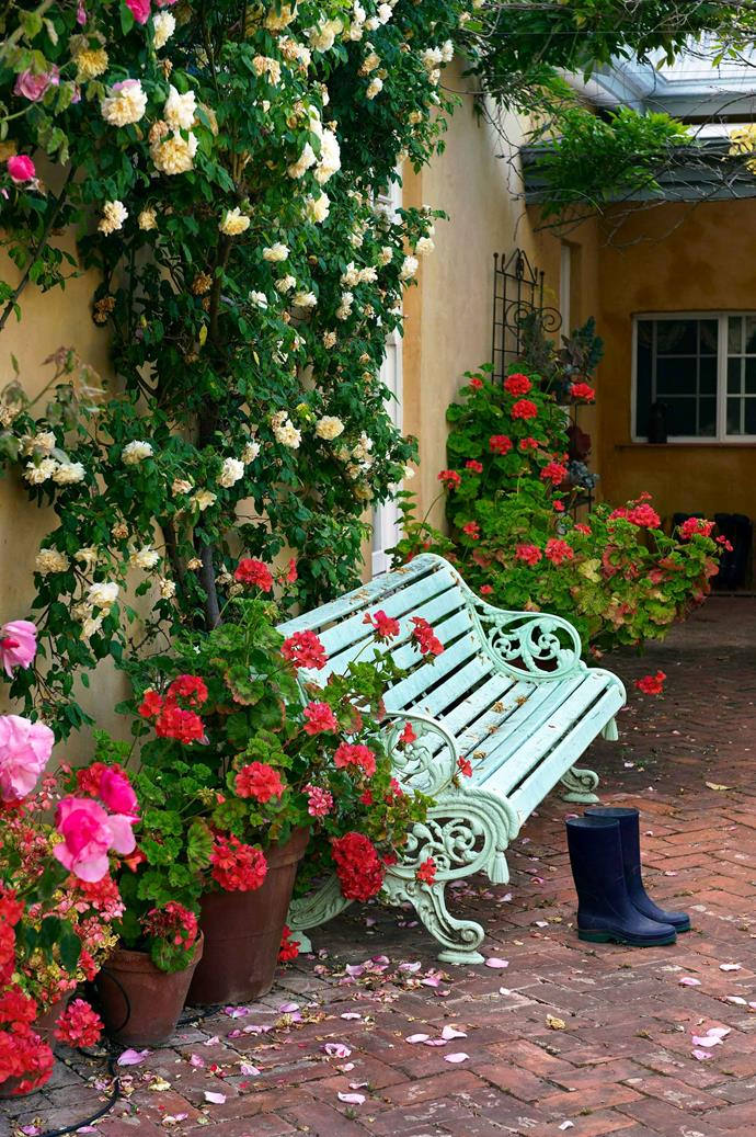 Roses can be trained to cover walls and can even be grown in pots.