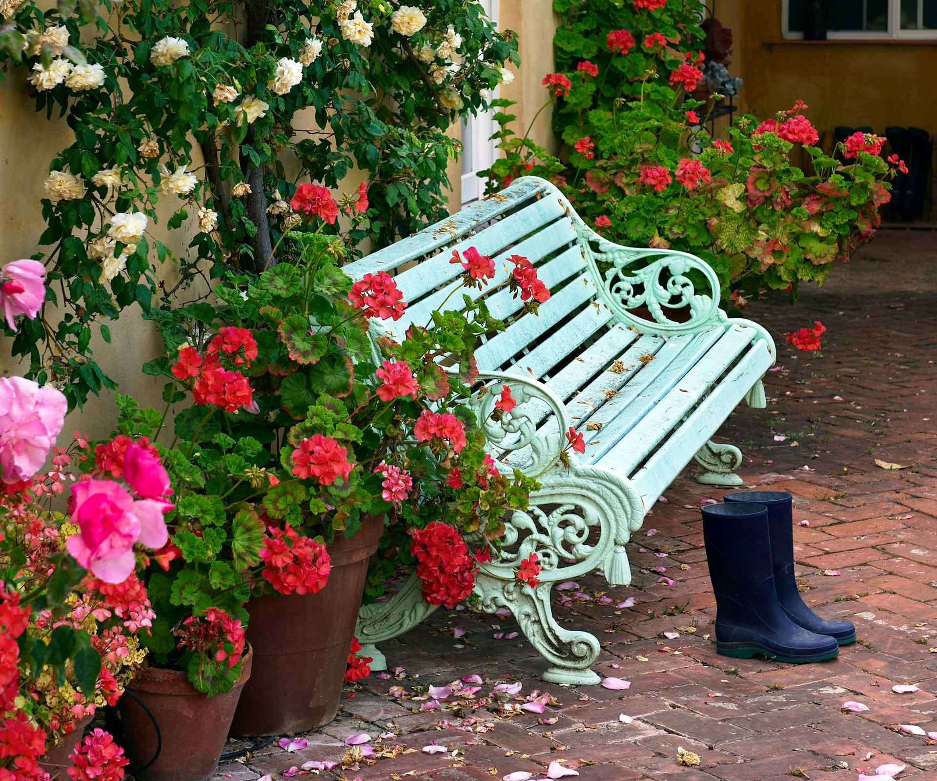 How to grow roses: Planting, pruning and troubleshooting
