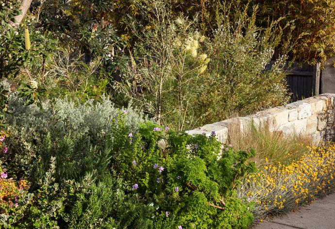 The front side garden spills onto the verge with *Poa labillardieri* and cottonhead and a dense mix of native shrubs including westringia and *Correa* with rosemary and scented geraniums.