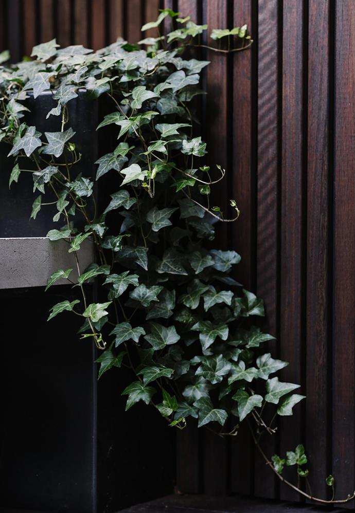 "English ivy (Hedera Helix 'Pittsburgh'). ""It's a hardy evergreen that grows in deep shade and requires little nurturing,"" says Lisa."