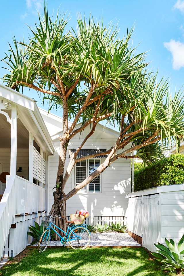 "An iconic Pandanus tree, typical of the area, takes pride of place alongside the deck of this colourful [coastal cottage in Byron Bay](https://www.homestolove.com.au/coastal-cottage-byron-bay-20442|target=""_blank"")."