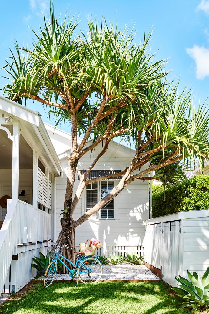 An iconic Pandanus tree, typical of the area, takes pride of place alongside the deck.