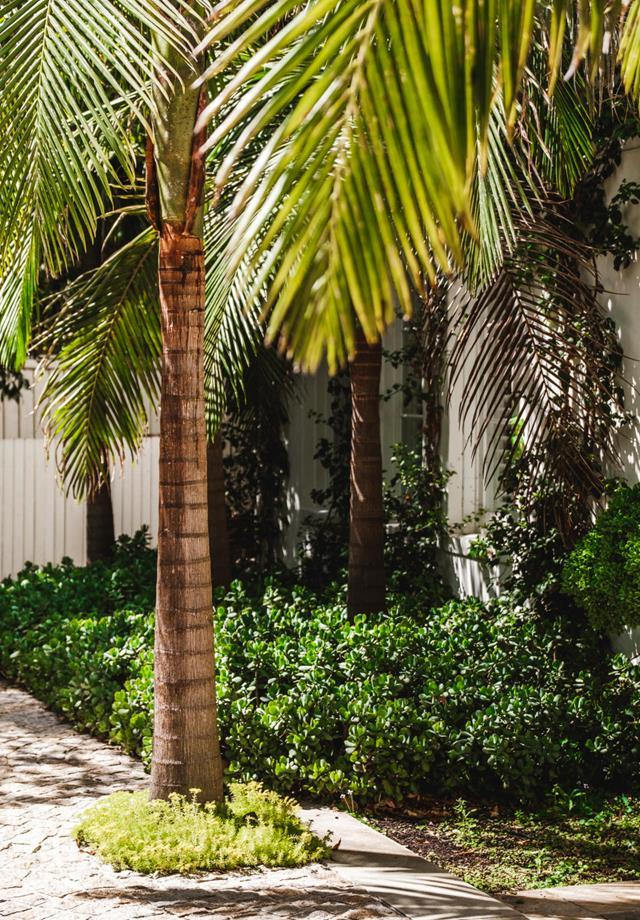 Bangalow palm. Crassula 'Blue Bird' is massed under the palms with Sedum 'Gold Mound' directly under the palm inset in the paving.