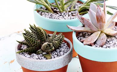 7 stylish ways to display cacti and succulents