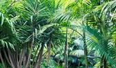11 types of palm tree