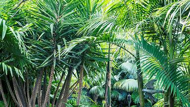 11 types of palm tree