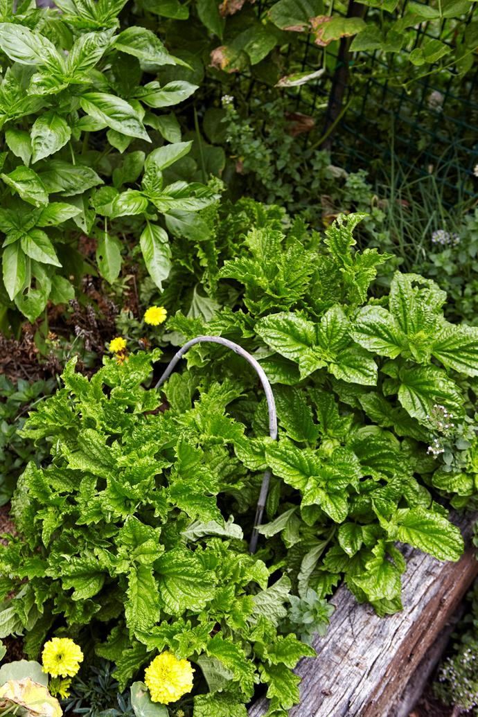 Grow herbs that you know you will use regularly.