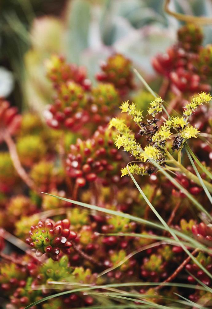 **Plant palette** Bright colours and interesting textures give this garden character, like the *sedum rubrotinctum*.