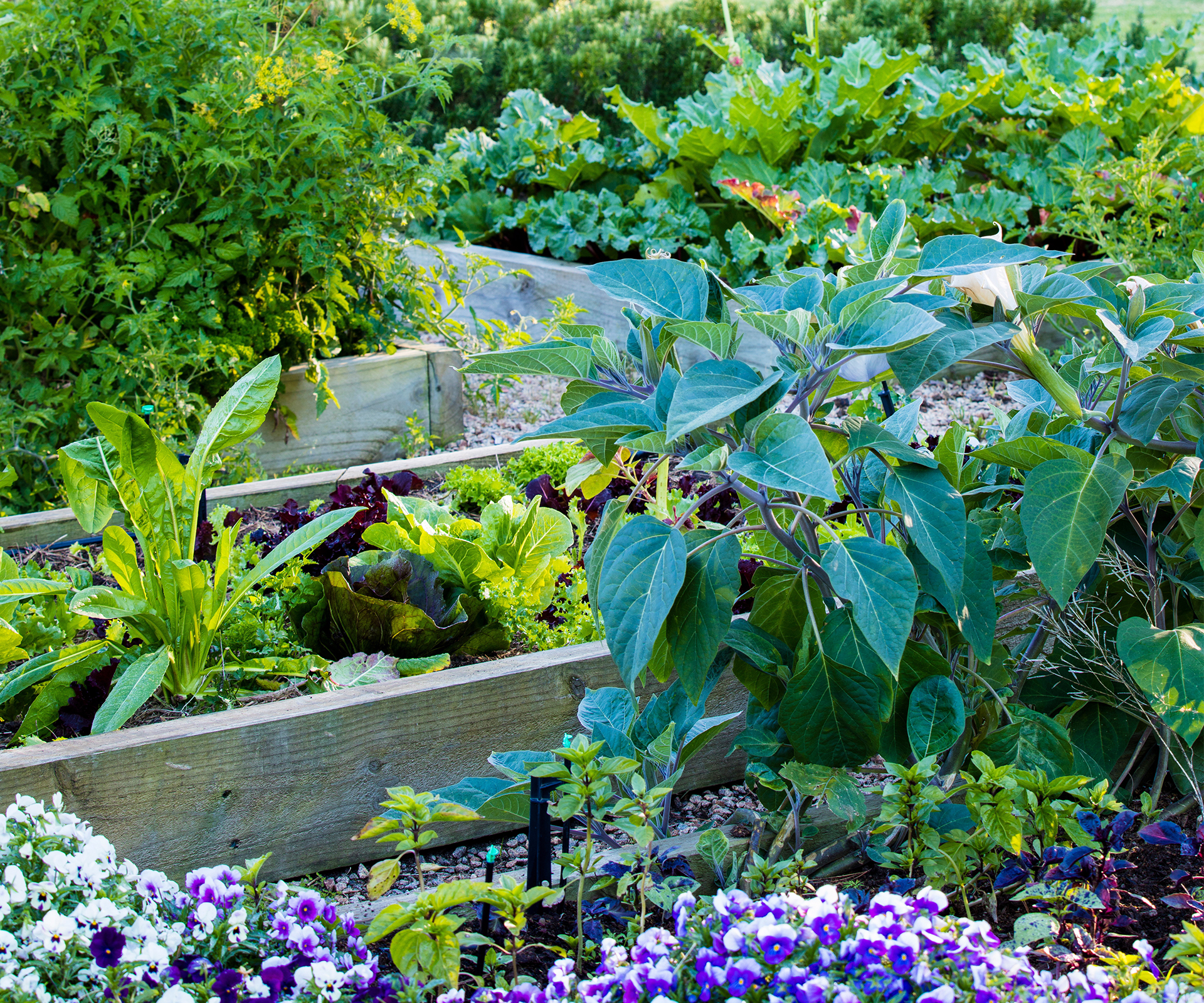 How to plant an edible garden that thrives