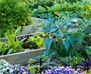 How to plant an edible garden