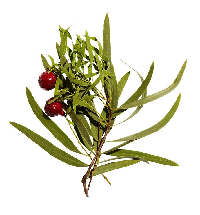 From the outside, Quandong fruit looks similar to a pomegranate with its rich red skin.